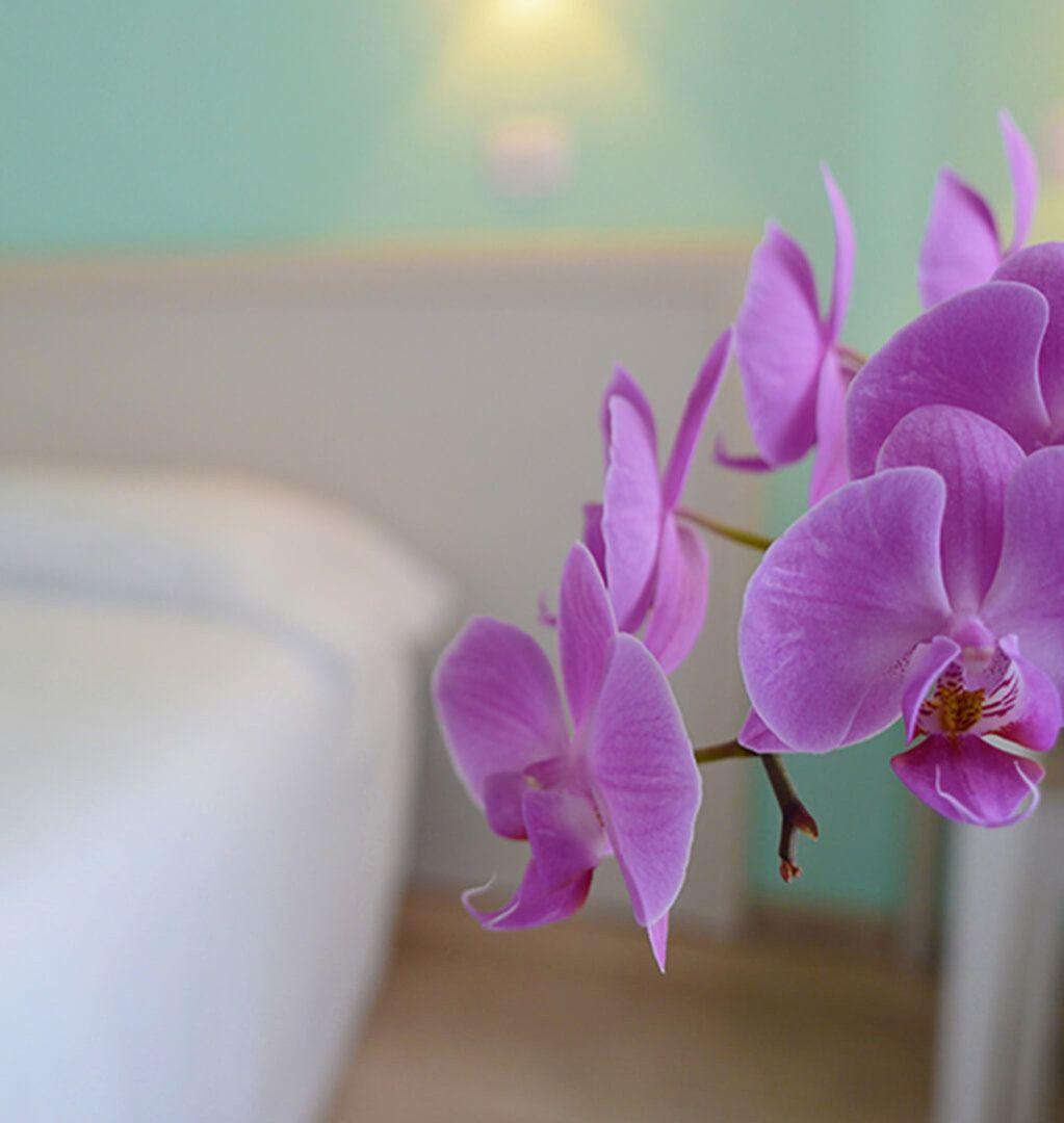 Orchidea 1024×1080